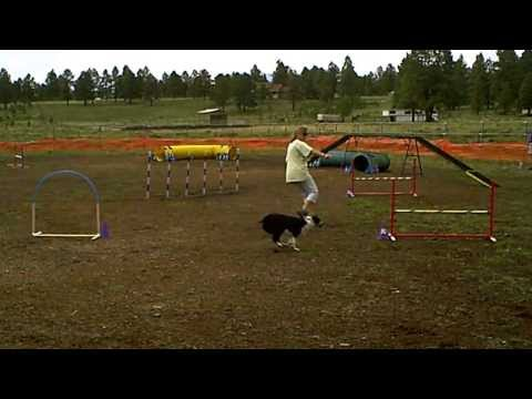1st ever agility run - NADAC Nov Std  July 2013  Parks, AZ