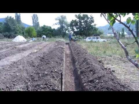 Как сделать траншею для посадки малины