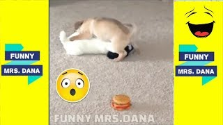 Try not to laugh || Animals are very funny You will never see it 🔷FUNNY MRS DANA
