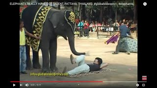 ELEPHANTS GOT TALENT, PATTAYA, THAILAND