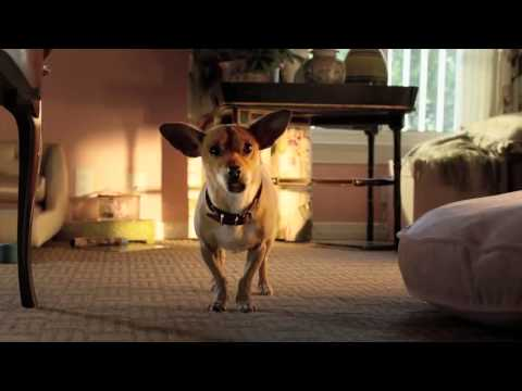 Beverly Hills Chihuahua 3 Trailer