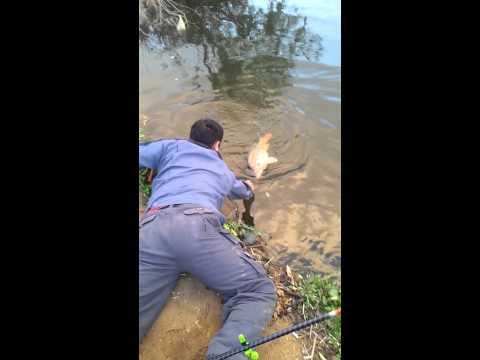 рыбалка в южной корее видео