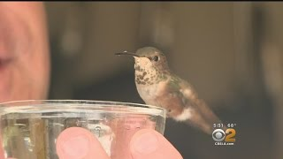 Man Goes The Distance For Tiny Hummingbird His Dog Helped Rescue