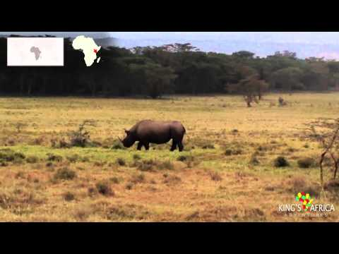 Lake Nakuru National Park - Black Rhino - Kenya