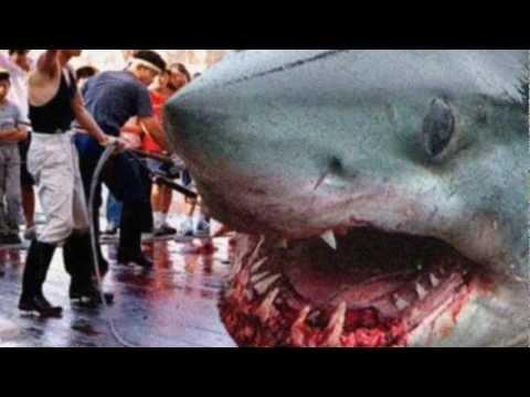 Megalodon Giant Shark In Japon Youtube