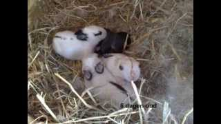 baby konijntjes aangeboden