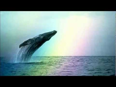 whales-dolphins-natural-sounds.html