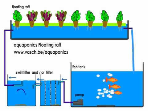 Aquaponics Floating Raft system