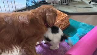 Puppy mauling
