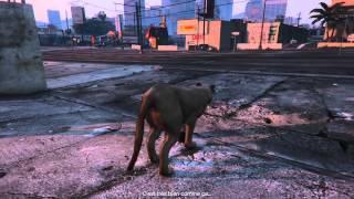 GTA 5 - Play as animal - Puma (peyote)