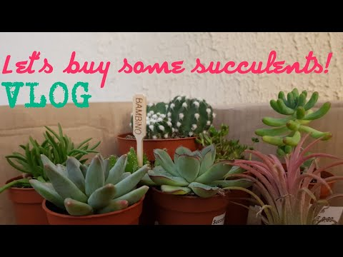 VLOG| COME BUY SOME SUCCULENTS WITH ME IN LUXEMBURG