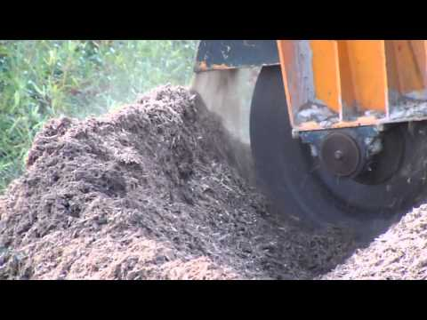 Taylor Tree Co. stump grinder creates sawdust, Kiln MS