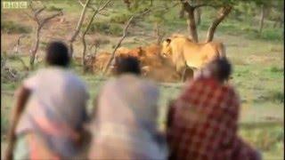Man vs Nature   Lion Vs Man   Theif Vs Lion