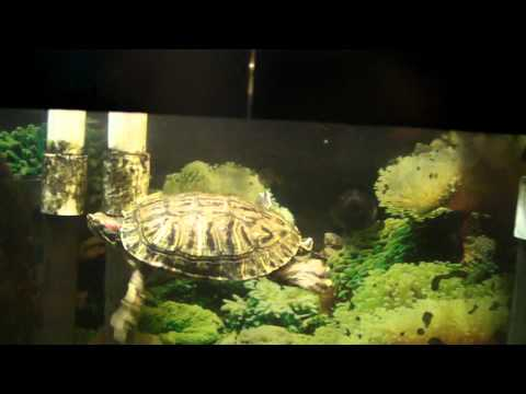 my turtle tank with DIY raised canopy filtered by an odyssea cfs 500