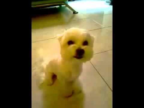 Ржач! Собака-улыбака! Очень смешной песик!