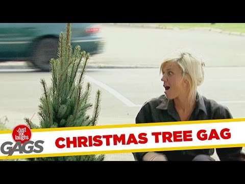 Christmas Tree Becomes MASSIVE- Throwback Thursday