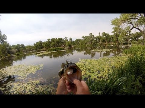 KVD Sexy Frog Fishing