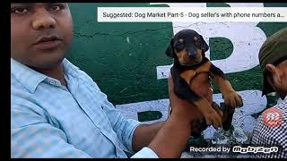 Dog market part 3 with phone number to. Contarct with me 8949656076