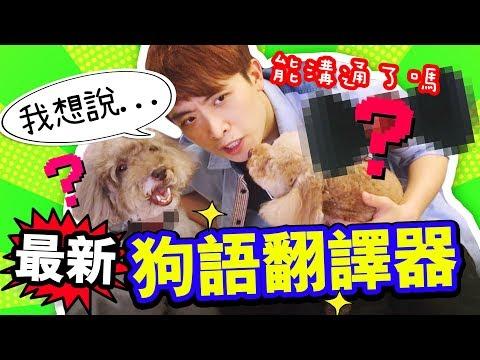 淘寶開箱:我能與愛犬溝通了 ?