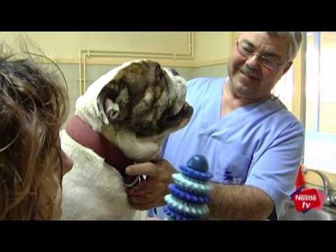 Salud dental de tu perro