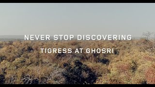 Discovering the Tigress at Ghosri in Tadoba I Land Rover Discovery Sport