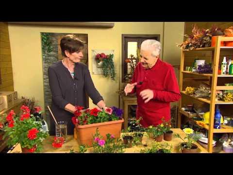Jak správně pečovat o balkónové květiny
