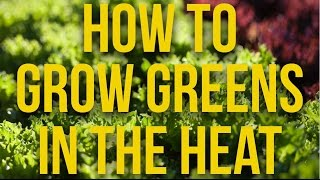 HOW TO - Grow Greens In The Heat