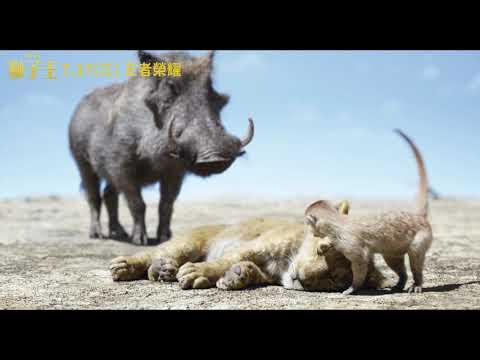 《獅子王》澎澎與丁滿片段 7.17(三)電影版 王者榮耀