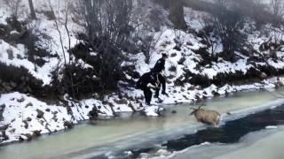 凍った川に鹿が落ちて這い上がれなくなった・・・ん?たすけてくれるの?