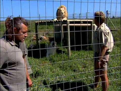 Aventura Selvagem - Leões - Parte 1