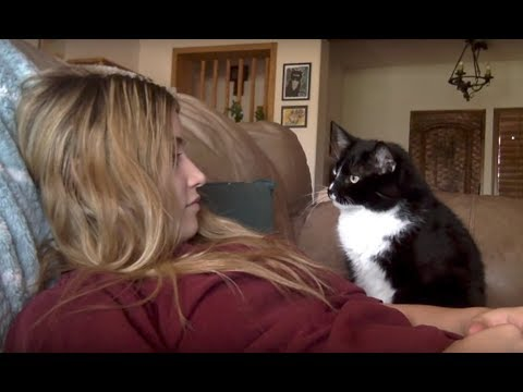Cat politely asking to get petted