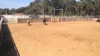 Shadow- Jared Lesh cowhorses