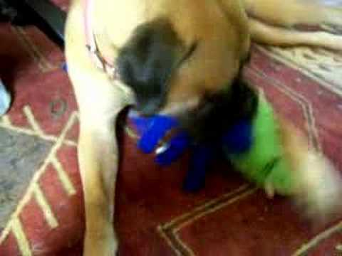 Mamie's Squeaky Toy video