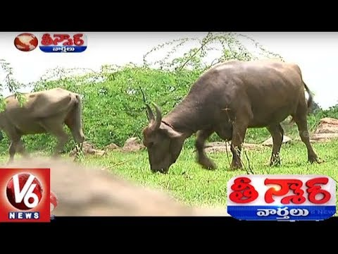 Businessman In Khammam Leaves His 150 Acres Land For Animal Feed | Teenmaar News