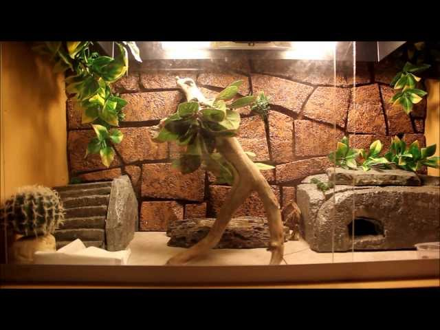 Leopard Gecko Care Video