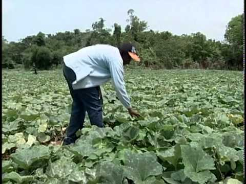 Jamaican Organic Fertilizer