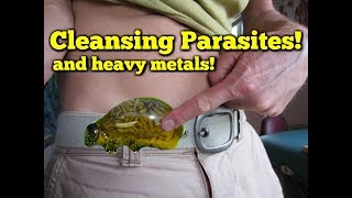 Cleansing Diet Tips - Parasites, Candida & Heavy Metals!