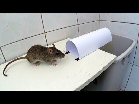 как правильно ловить мышей мышеловкой
