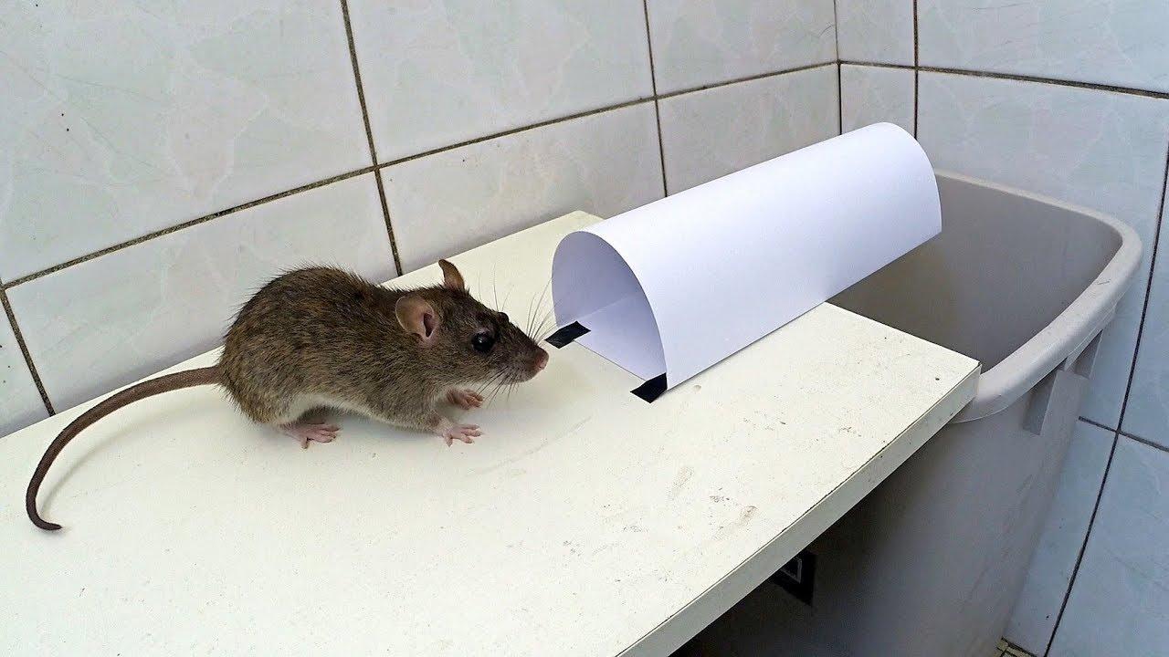 Как поймать крысу, сделать крысоловку своими руками из бутылки 56