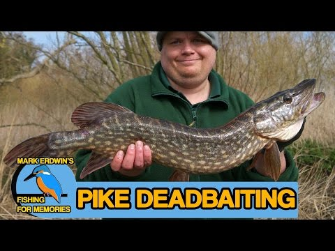 Pike Fishing Near The End Of The River Season (Video 36)