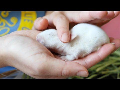 可愛い産まれたての赤ちゃんウサギ♪