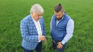 În ferma lui Dimitrie Muscă și a fiului său Călin