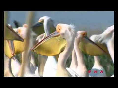 Danube Delta Romania part 2_www.unzipromania.com