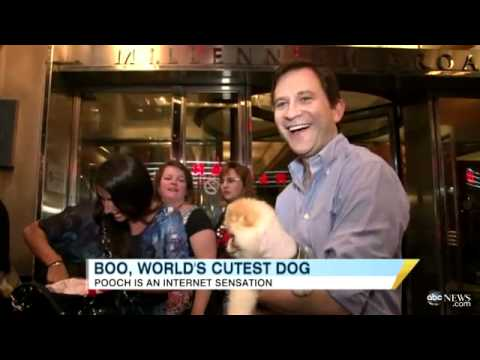Boo, The World's Cutest Dog, Takes Over Times Square on Jumbotron