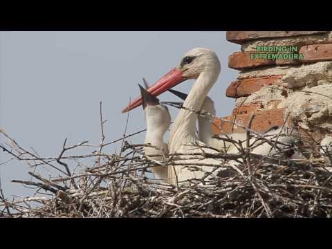 birding in extremadura.wmv