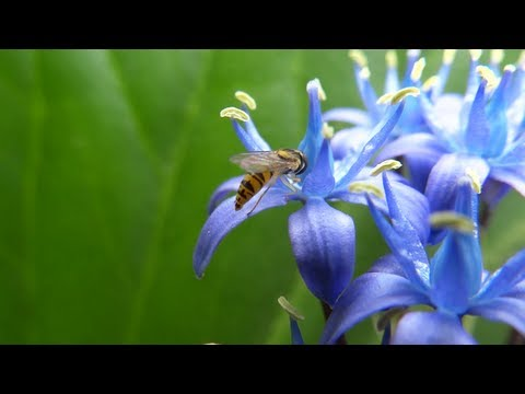 Beautiful Blue Flowers - Nature Sounds of Birds - Relaxation Video HD 1080p