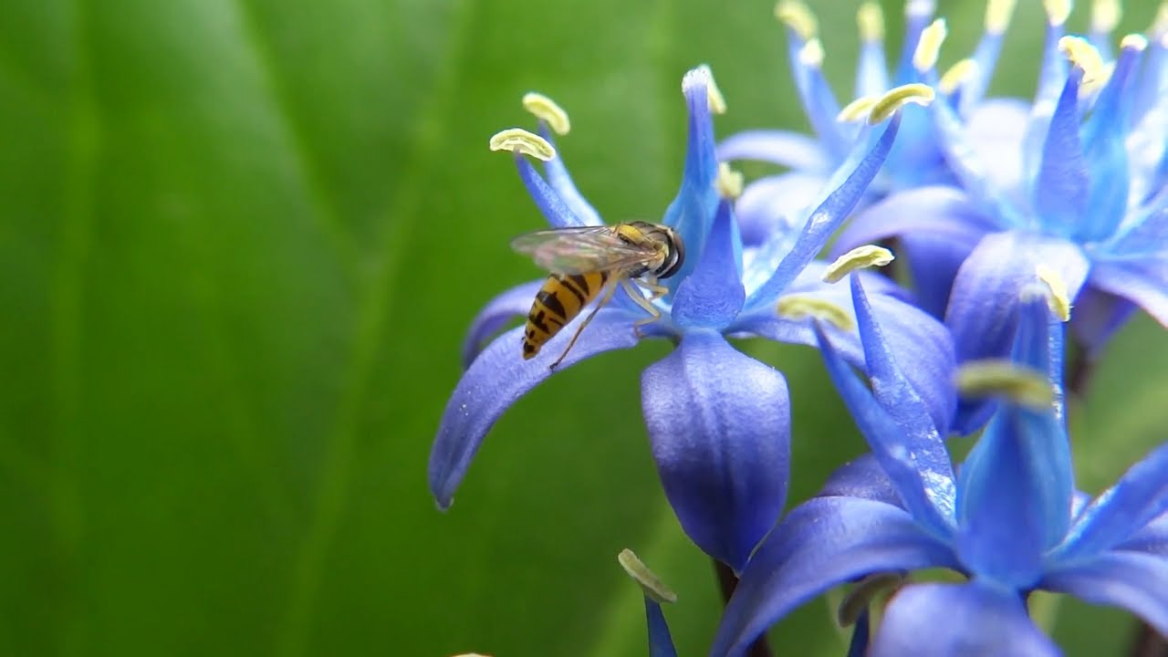 Beautiful Blue Flowers - Nature Sounds of Birds ... Relaxing Nature Sounds