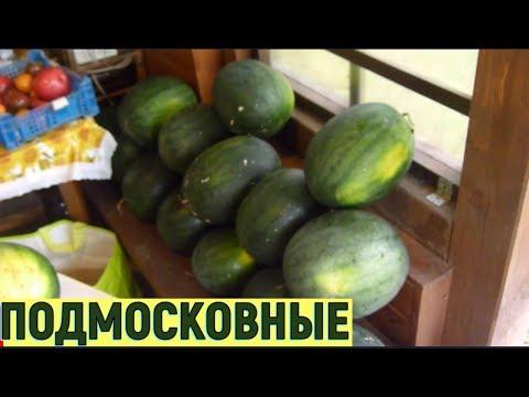 Арбузы в Подмосковье в открытом грунте 2016.