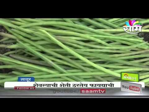 Viraj Mule's Drumstick (shevga) intercrop success story