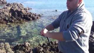 zargana avı kıyıdan (şakran 4 şubat )